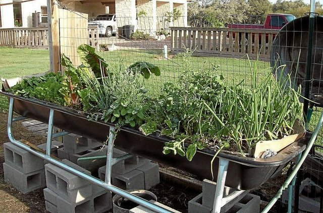 Containers of any size can be used for ve able gardening This feed trough garden produces all kinds of panion plant ve ables that grow in similar