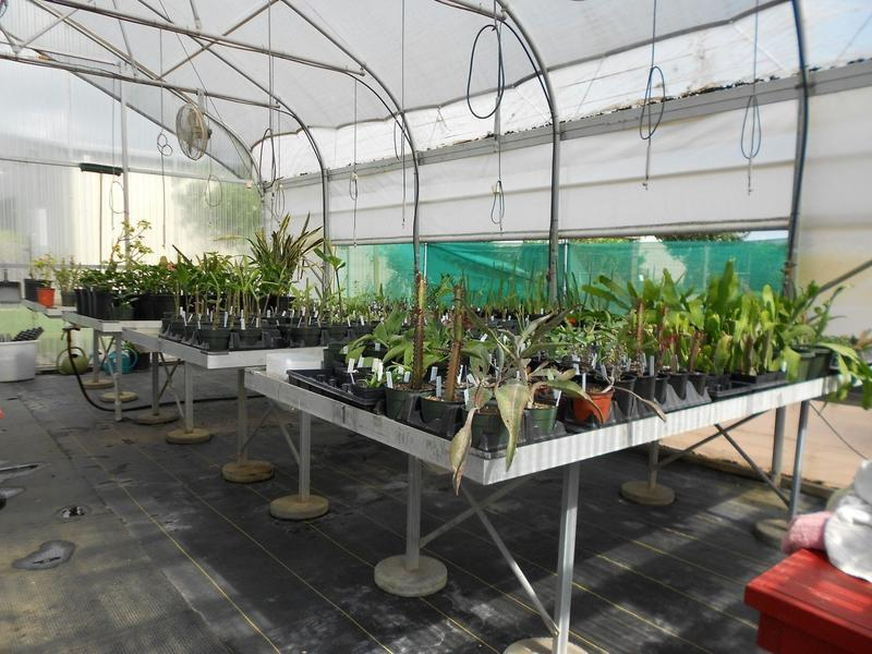 Propagation and Greenhouse Training