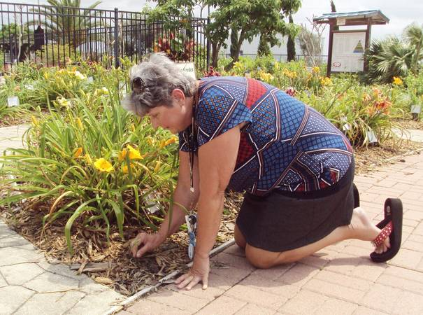 Become A Master Gardener Vivian Cliffe