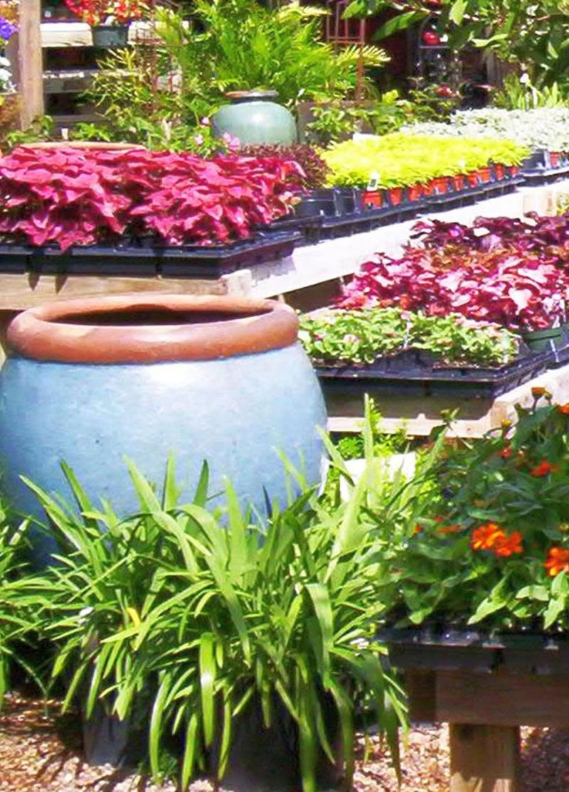 Container plants at nursery