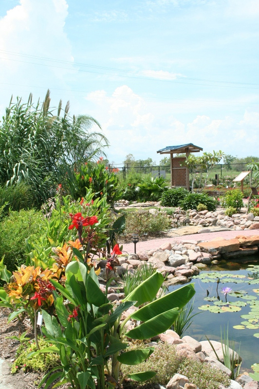 Canna Lily and other tropicals around pond at VEG