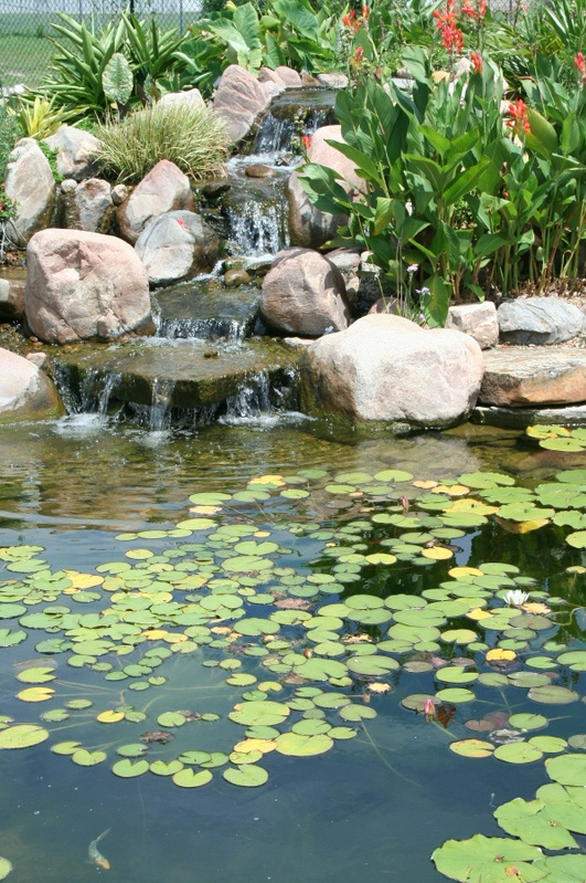 Water Lilies and other tropicals at Victoria Educational Gardens